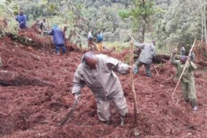 За последние 20 лет в мире восстановили леса площадью с Францию