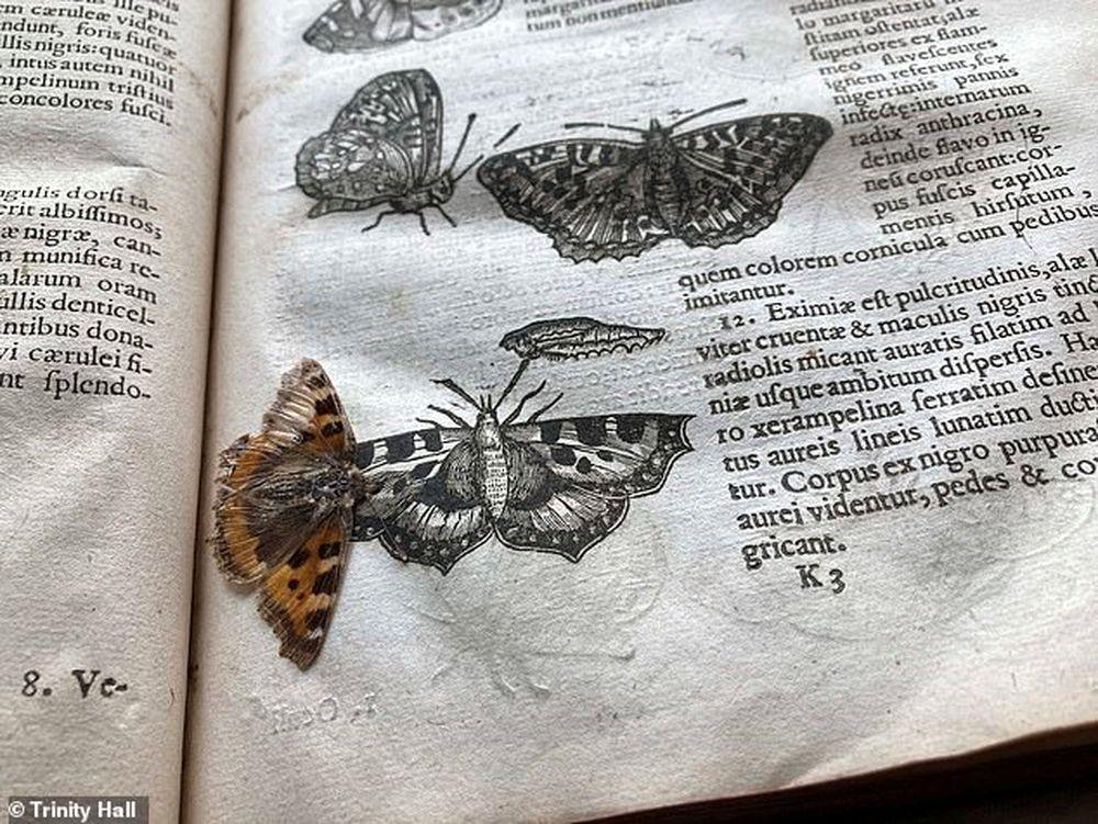 400-летняя бабочка прекрасно сохранилась между страницами книги в библиотеке Тринити-колледжа