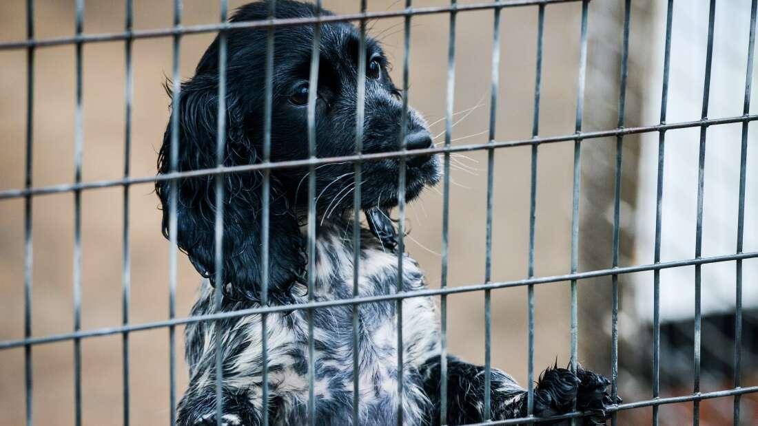 В Великобритании животных признают разумными существами по закону