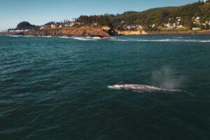 В Калифорнии к берегу прибило уже двенадцатого мертвого кита. Из-за чего они гибнут?