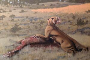 Обнаружен самый крупный вид саблезубой кошки: ему 9 млн лет