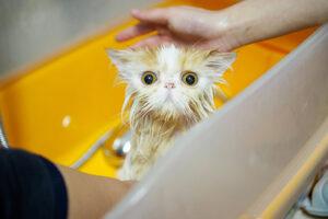 Почему коты боятся воды?