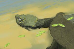 В США открыли новый вид древнейшей бокошейной черепахи: ей 96 млн лет