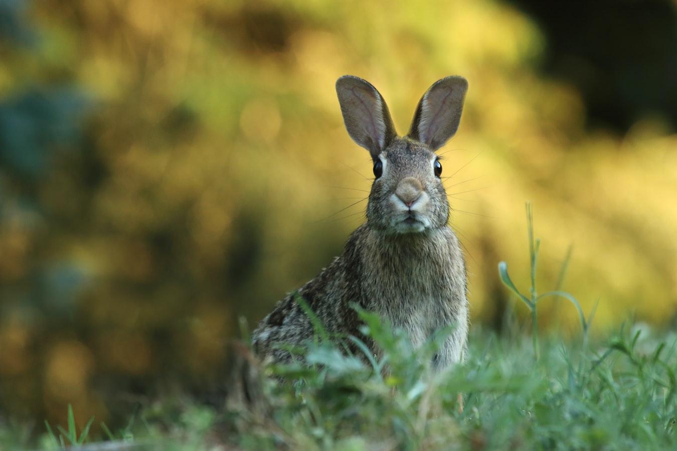 Почему не бывает кроликов размером с лошадь?.Вокруг Света. Украина