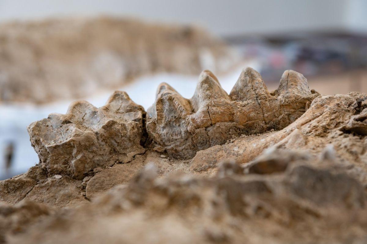 В Калифорнии рейнджер нашел окаменевший лес и останки мастодонта