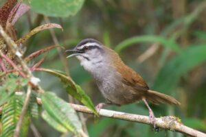 Мозг птицы координирует слаженность пения в лесном хоре