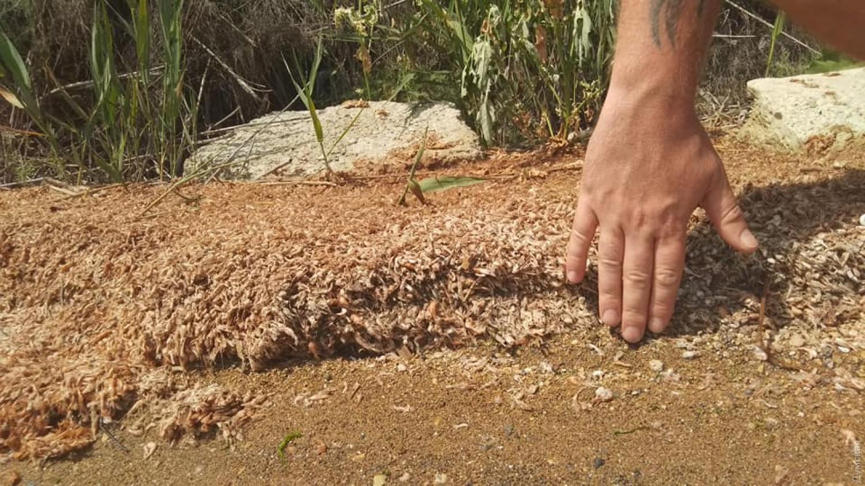 В Одесской области погибли миллионы креветок.Вокруг Света. Украина