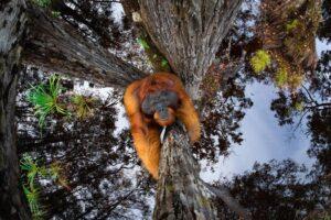 Мир вверх тормашками: названы победители престижного фотоконкурса