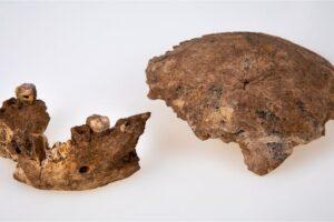 Найденные в Израиле останки могут принадлежать новому виду древних людей