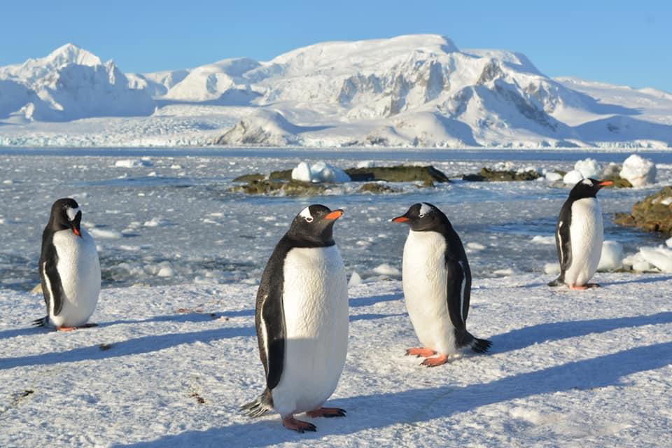 Пингвины создали новую колонию возле станции