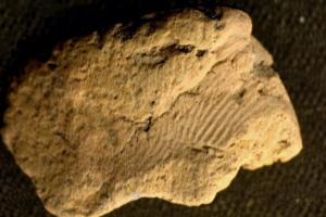 Археологи разгадали тайну отпечатков на древней керамике Оркнеев