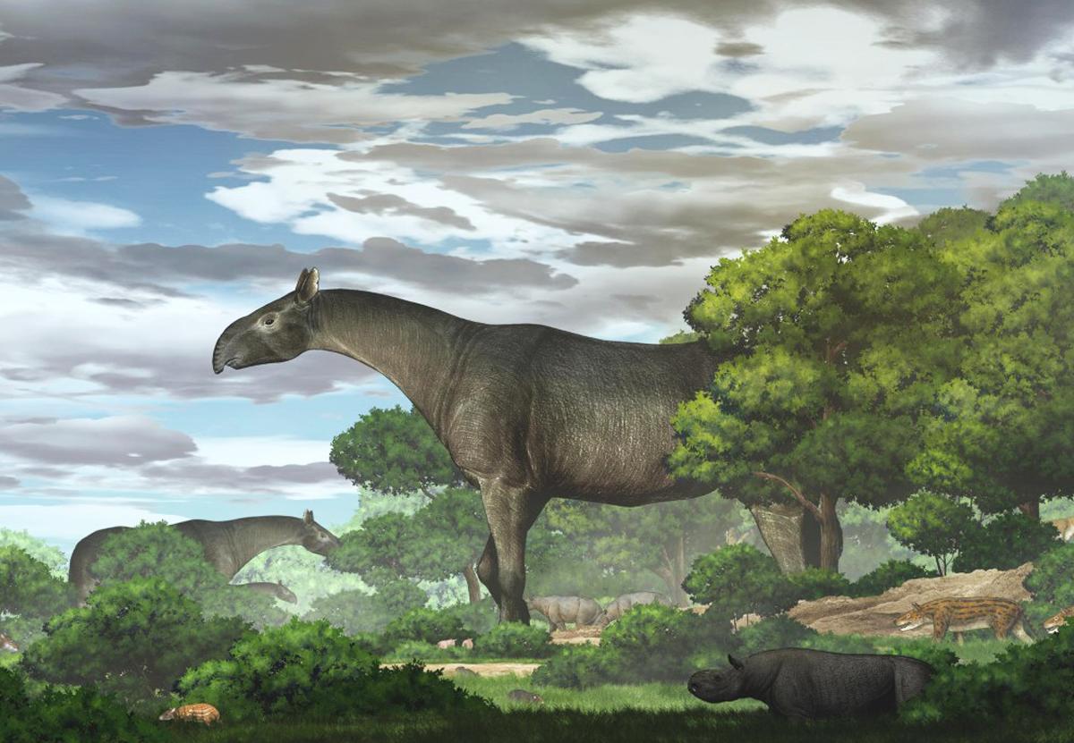 В Китае нашли окаменелости гигантского носорога – одного из крупнейших млекопитающих в истории