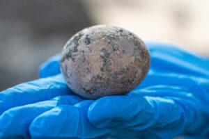В Израиле нашли куриное яйцо возрастом тысячу лет