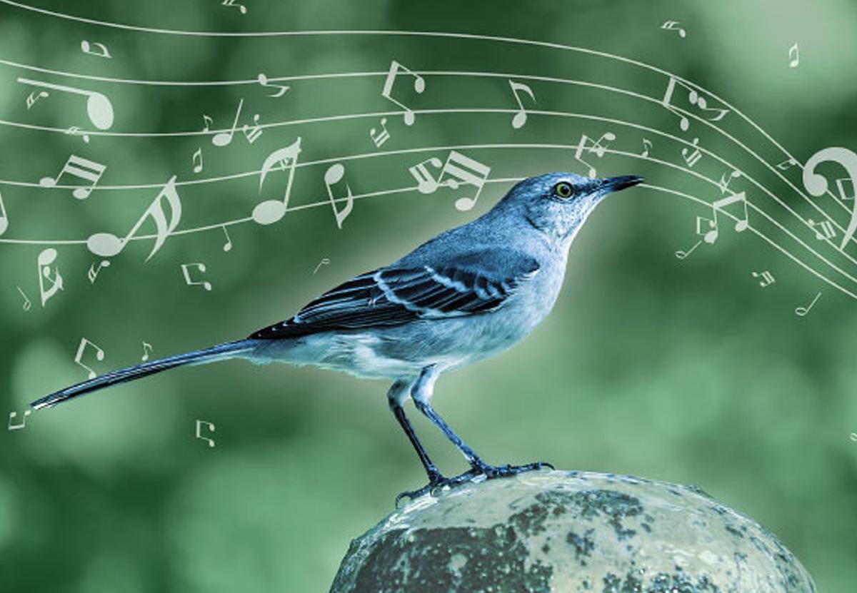 Пересмешник не копирует чужие песни: он создает свои.Вокруг Света. Украина