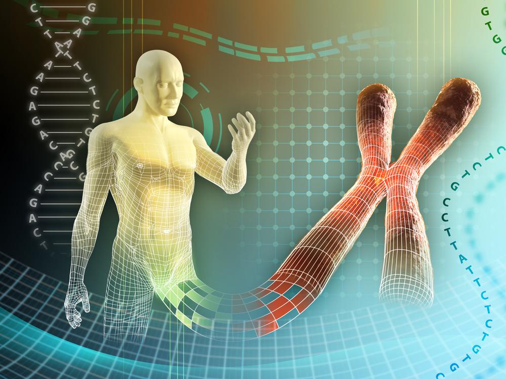 Впервые в истории генетики взвесили хромосомы человека.Вокруг Света. Украина