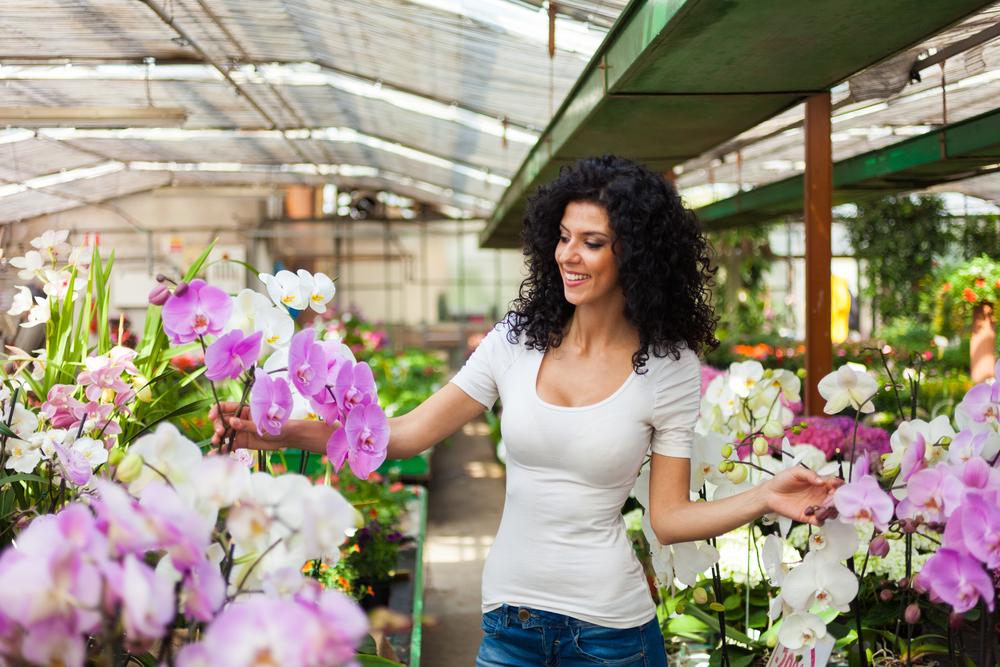 Орхидеи мира: интересные факты о цветах.Вокруг Света. Украина
