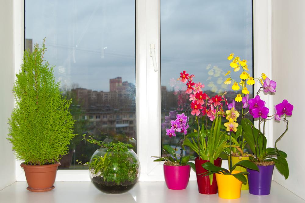 Разновидности орхидей: сколько их и какие самые популярные.Вокруг Света. Украина