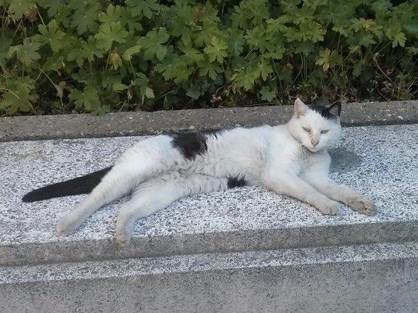 Министерство финансов Франции ищет кота на вакансию любимца