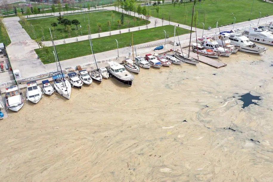 В районе Стамбула море покрылось слизью.Вокруг Света. Украина
