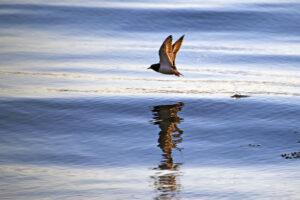 Мертвые зоны в Мировом океане: причины появления и прогнозы на будущее