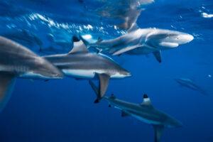 Акулы всегда в движении, даже во сне. Как им это удается?