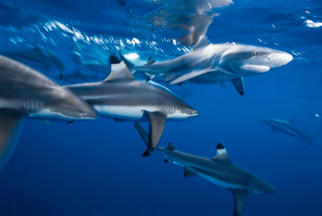 Акулы всегда в движении, даже во сне. Как им это удается?.Вокруг Света. Украина