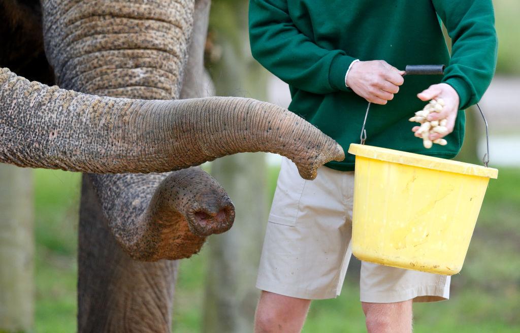 Слоновий хобот всасывает воду со скоростью 150 метров в секунду.Вокруг Света. Украина
