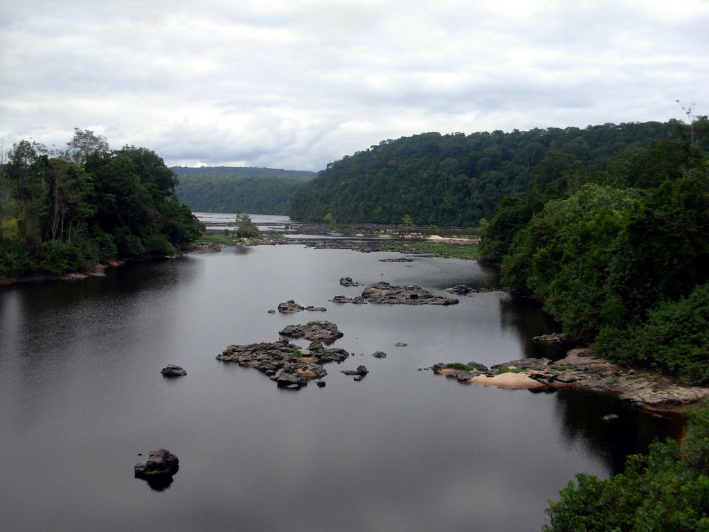 Запад выкупил у Габона живой лес