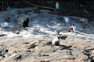 В Бразилии есть остров, где живут только кошки