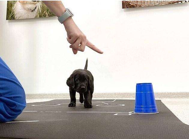 Желание щенков дружить с людьми заложено в генах