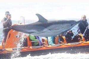 Английский фотограф снял парящего в воздухе дельфина