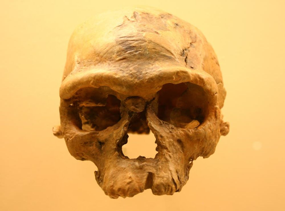 Как теплые течения в Тихом океане повлияли на эволюцию древнего человека.Вокруг Света. Украина