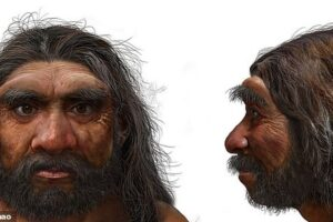 Человек-дракон: череп, найденный в Китае, вероятно, принадлежит к ранее неизвестному виду древних людей