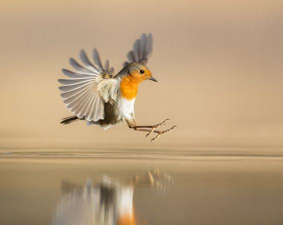 Мы знали, что при миграции птицы ориентируются на магнитное поле Земли. Теперь знаем, как именно
