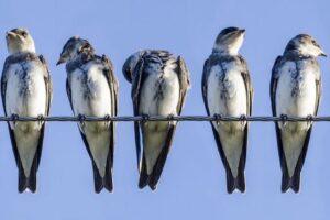Почему птиц не бьет током, когда они сидят на проводах