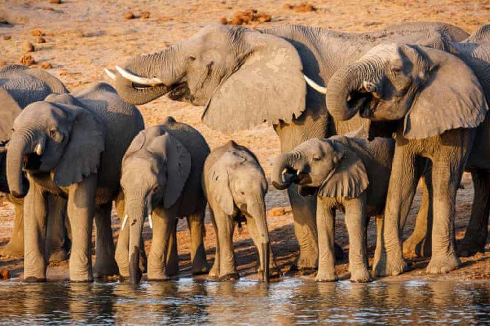 В Намибии жизнь 130 тысяч слонов оказалась под угрозой из-за нефтедобычи