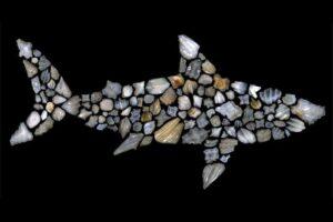 Акулы почти полностью исчезли из океанов 19 млн лет назад