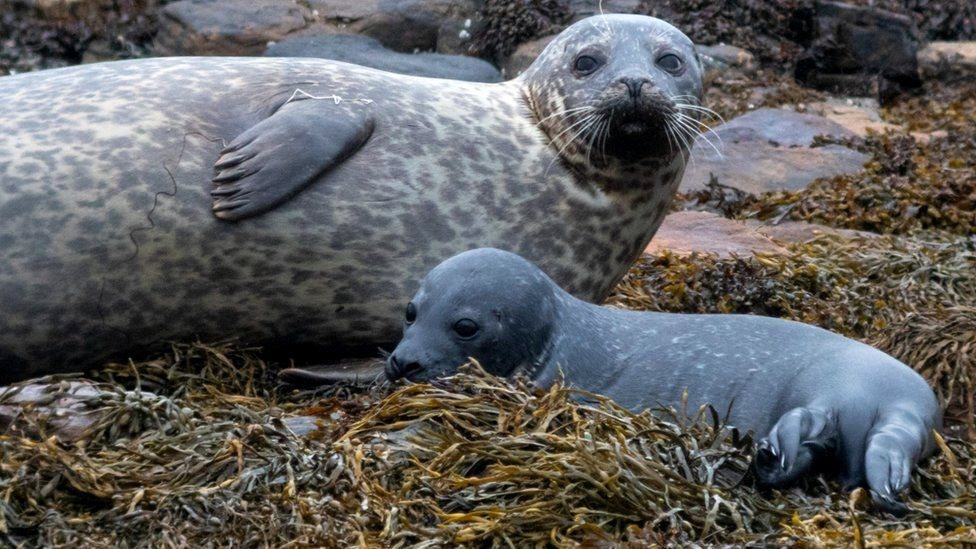 Тюленей на Оркнеях будут опознавать по уникальным чертам.Вокруг Света. Украина