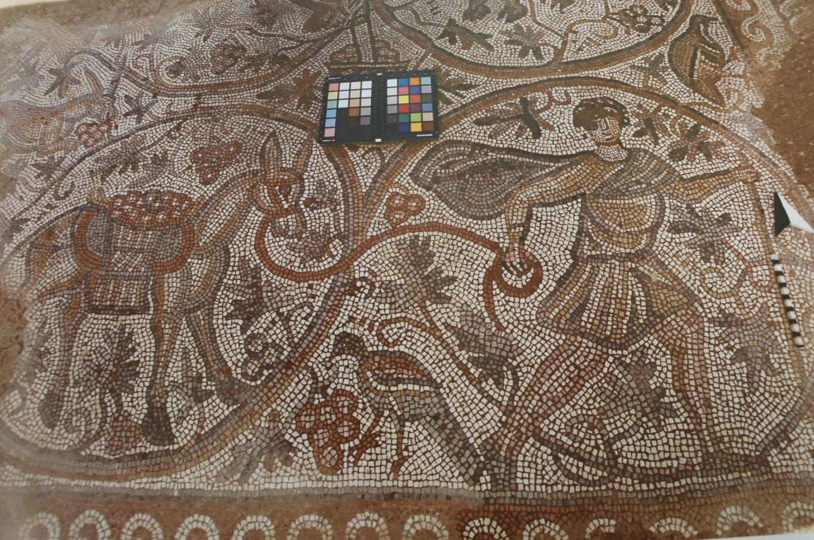 В Турции возродили античную мозаику с сюжетом о сборе винограда