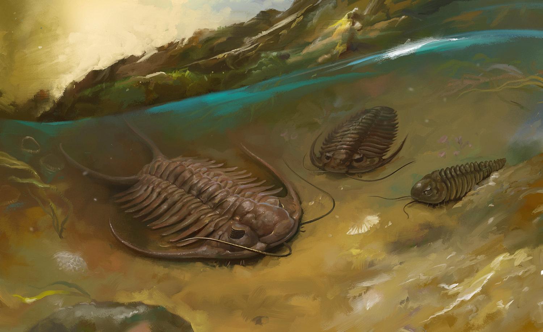 Выживший: найдены останки трилобита, уцелевшего после атаки гигантского скорпиона.Вокруг Света. Украина