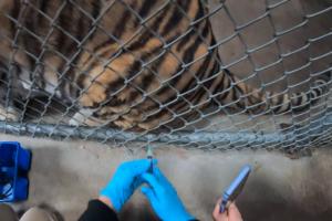 В США животных в зоопарках начали вакцинировать от COVID-19