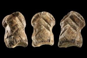 Древнейшее произведение искусства: в Германии нашли статуэтку возрастом более 50 тыс. лет