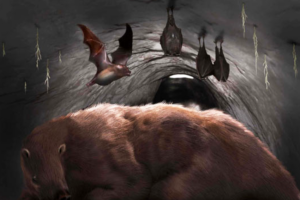 В Аргентине нашли окаменелость огромной мыши-вампира возрастом 100 тысяч лет