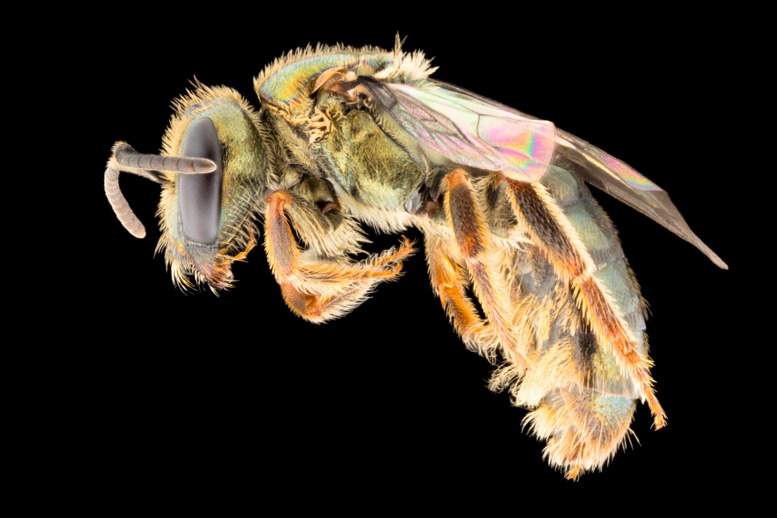 Энтомологи обнаружили вид, который выиграл от разрушительной деятельности человека.Вокруг Света. Украина