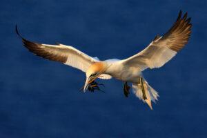 Птицам с темными крыльями легче летать