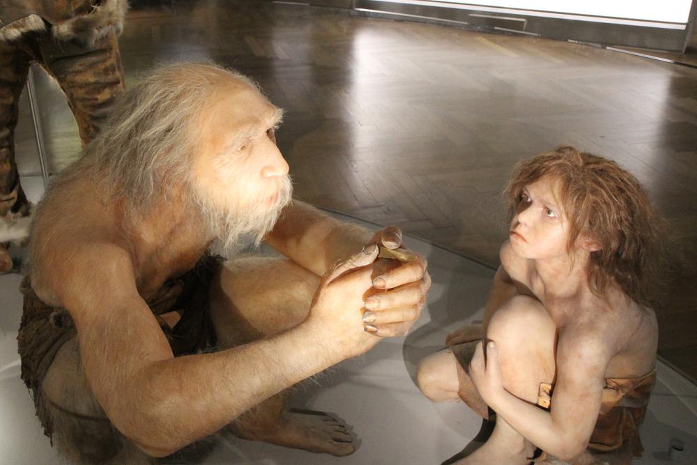 Неандертальцы вымерли из-за массовой гибели новорожденных