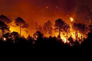 Крупные лесные пожары порождают огненные бури с грозами. И это происходит все чаще