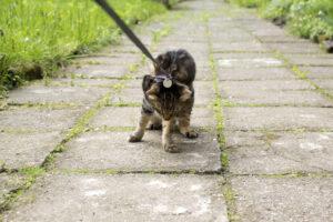 В Австралии кошек посадили под домашний арест