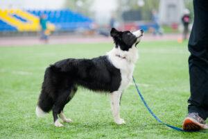 Среди собак тоже есть таланты и бездари