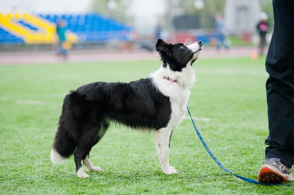 Среди собак тоже есть таланты и бездари.Вокруг Света. Украина